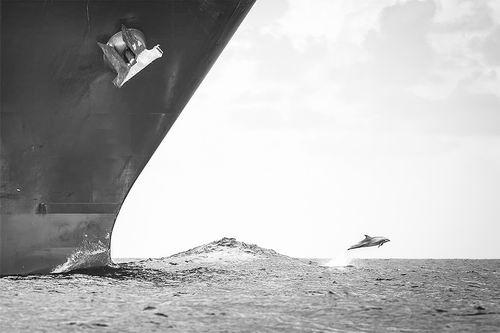研究显示船舶噪音严重影响海洋生态系统