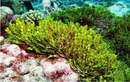 达门与Maris合作研发海藻整体解决方案