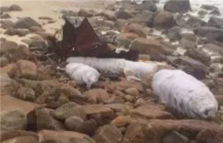 阳明海运一艘集装箱船在澳大利亚被扣押