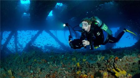 废弃钻井平台成为生机勃勃的海洋生态系统